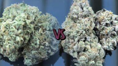 Weed Wars: FFC x MAC vs FFC x MAC