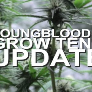Youngblood's LED Grow Tent Update (Week 3)