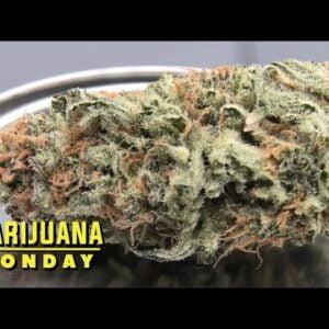 Apex R1 Marijuana Monday