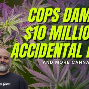 Cops Raid a Totally Legal Grow Op and Cause Over $10 Million in Damages