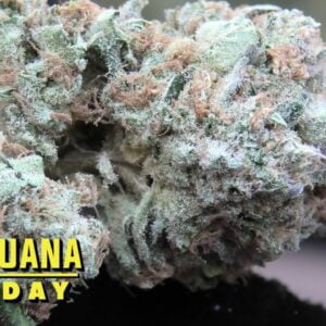Glintento Marijuana Monday