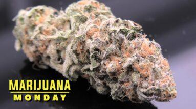 Guava Cookies Marijuana Monday