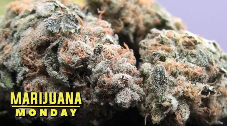 Strawberry Guava Marijuana Monday