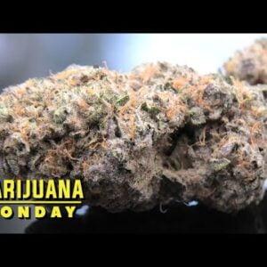 Wedding Frost #3 Marijuana Monday