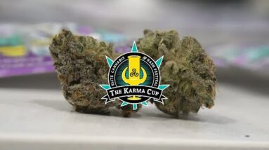 Karma Cup Judges Kit 2021 (Judging Sativa Bud)