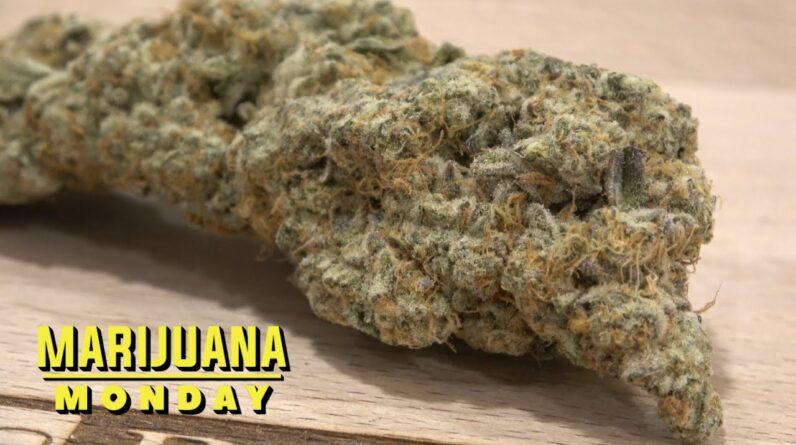 Sugar Mints 3 Marijuana Monday (Youngblood Edition)