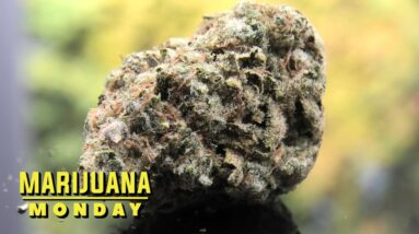 Dirty Banana Marijuana Monday