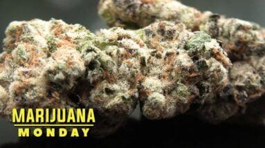 Mint Slushy Marijuana Monday
