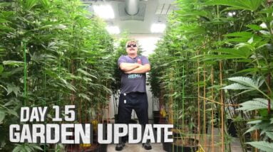 Remo's Garden Update (Day 15)
