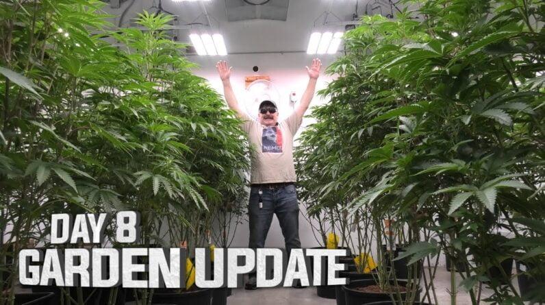 Remo's Garden Update (Day 8)