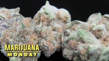 Vanilla Berry Pie Marijuana Monday